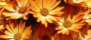 Floriterapia Psicodinamica, cosa significa?