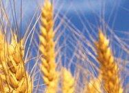 La tecnologia HYST per la trasformazione delle biomasse in alimenti ed energia sostenibile