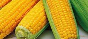 Intolleranze e Allergie alimentari, il mais, la soia, il frumento: 3 alimenti da tenere sotto controllo