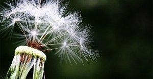 Scopri le tre leggi fondamentali dell'universo: per vivere nell'amore e nella gratitudine