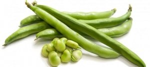 Le fave: un alimento protagonista dei mesi estivi