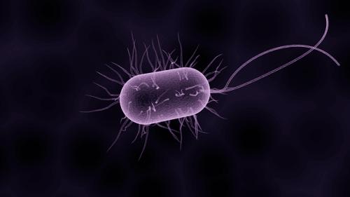 La terapia fagica: scopri cosa sono i batteriofagi e perché sono una valida terapia antibiotica naturale