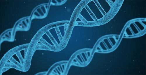 Epigenetica: il nuovo numero di Scienza e Conoscenza è uno straordinario viaggio oltre il DNA