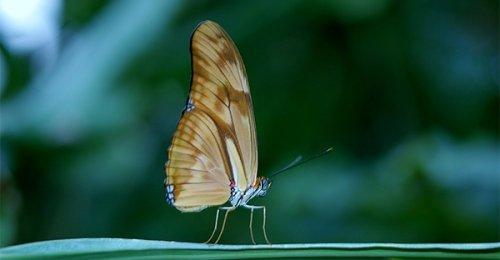 Il battito d'ali della farfalla e l'uragano: scopri la fisica della complessità
