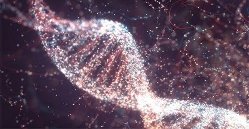 Il DNA impara: intervista a Ernesto Di Mauro