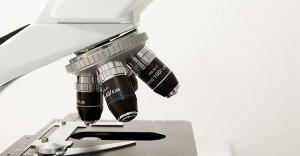 La magia del microscopio: con questo strumento anche la realtà più banale si trasforma in meraviglia