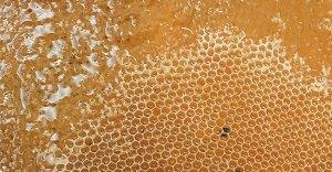 Sinusite: curala con il miele di Manuka