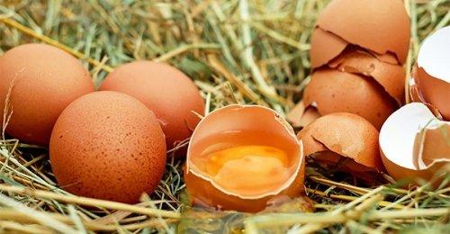 Uova e colesterolo: sfatiamo un mito