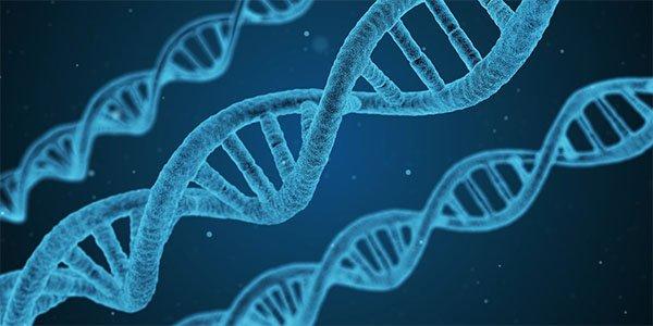 Cordyceps: fortifica il sistema immunitario e integra le terapie oncologiche tradizionali