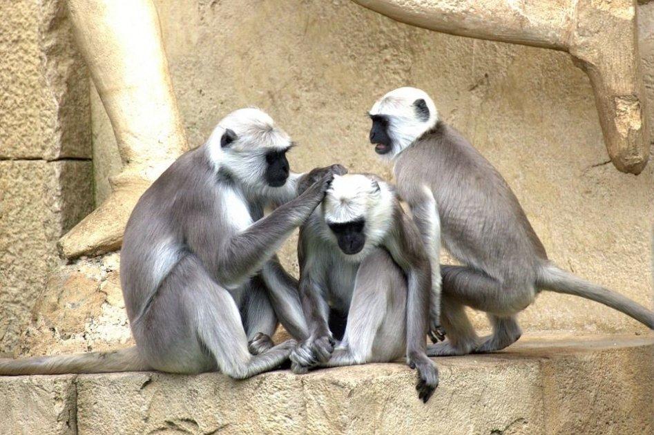 La riscoperta della coscienza animale e umana - terza parte