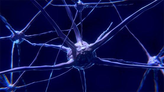 Possibili modelli fisici della coscienza e loro conseguenze: da Eccles agli psitrioni alla teoria olografica di Pribram