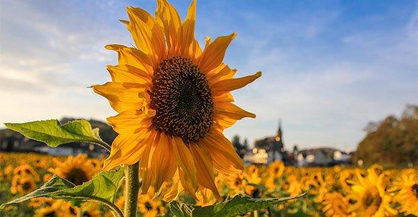 Alberi, sole, batteri: vivere nella natura ci fa fare il pieno di vitamina D e benessere