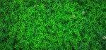 Il linguaggio quantistico delle piante