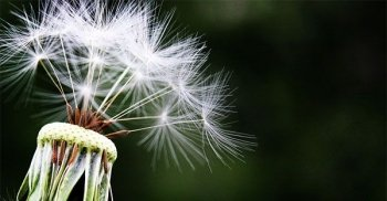 Allergie: i rimedi di Madre Natura