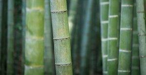Il bambù fa bene alla pelle, ai capelli e a alle ossa