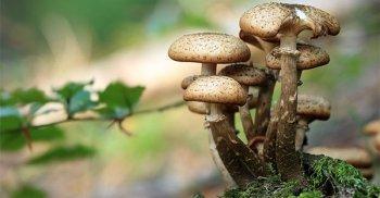 I funghi medicinali sono ottimi prebiotici perché nutrono il tuo microbiota