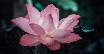 Meditazione: un valido aiuto per i pazienti oncologici