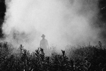 Tecno-manipolazioni della natura e pesticidi: il killer glifosato