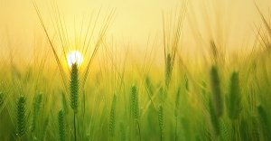 Il mattino ha l'oro in bocca: scopri il metodo The Miracle Morning